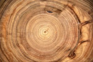 tree rings arithmetic sequence